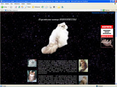 """Создан: """"Одностраничный сайт: Персидские кошки шиншиллы"""""""